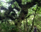 tree-woodland-lassau-ciara