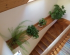 accommodation-stairwell-plants