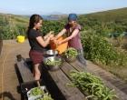 beans-shelling-work-garden