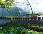 garden-polytunnel-pots