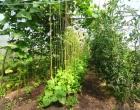 polytunnel-macalla-farm-garden-organic