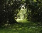 woodland-lassau-trees-path