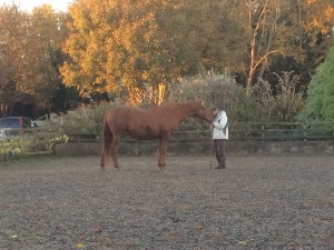Horsemanship and Mindfulness, the Epona Approach