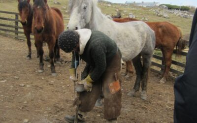 Natural Hoof Care for Horse Owners